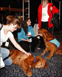 Figure. Therapy dogs... - Click to enlarge in new window