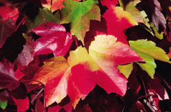 Figure. No caption a... - Click to enlarge in new window